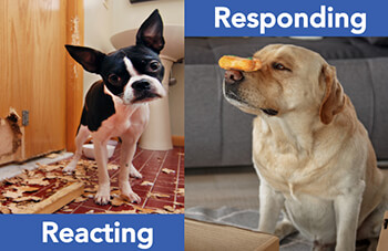 respond vs. react_DOgs